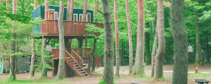 PICA富士吉のツリーハウス