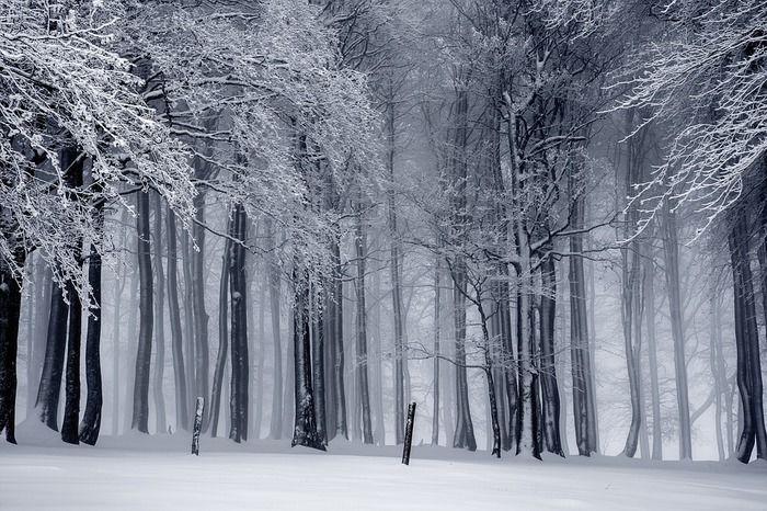 雪が積もった森林