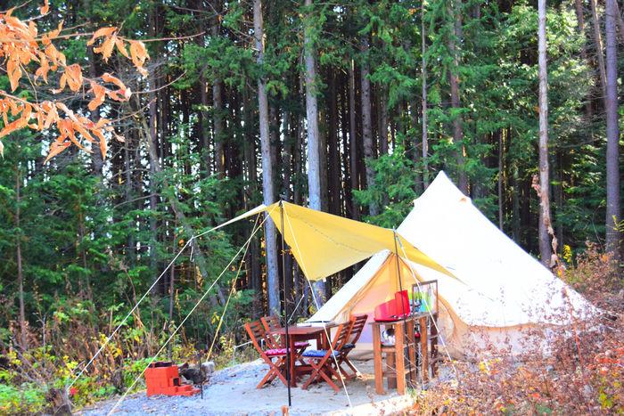 フローラキャンプサイトのテント