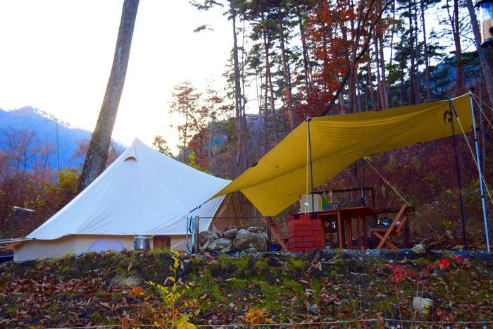 フローラキャンプサイトのテントと紅葉