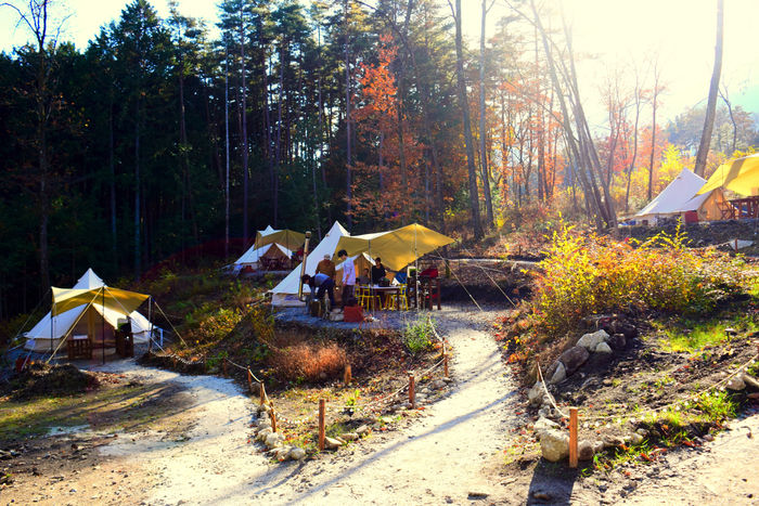 FLORA Campsite in the Natural Gardenのテントサイト