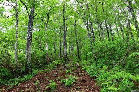 自然豊かな登山道