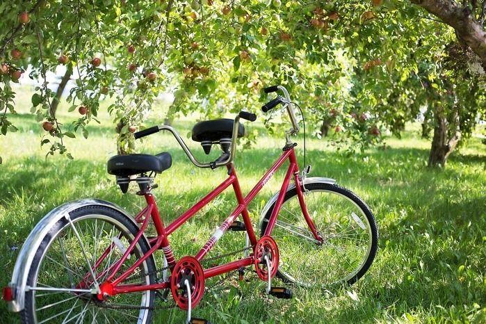 木の下に止められた赤い自転車