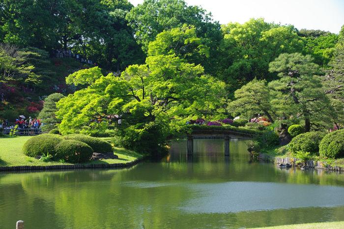 池と緑豊かな風景