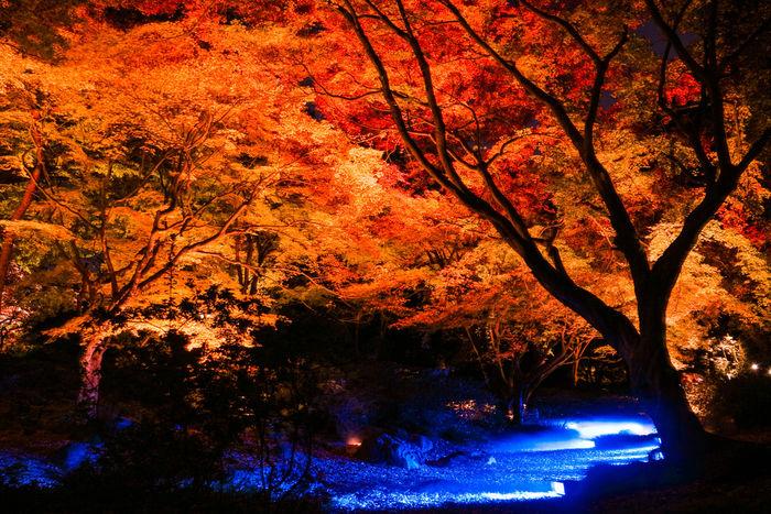 星のや京都の紅葉