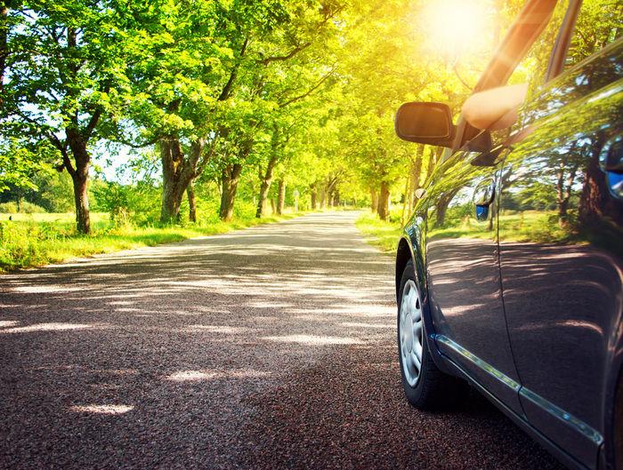 並木道を走る車