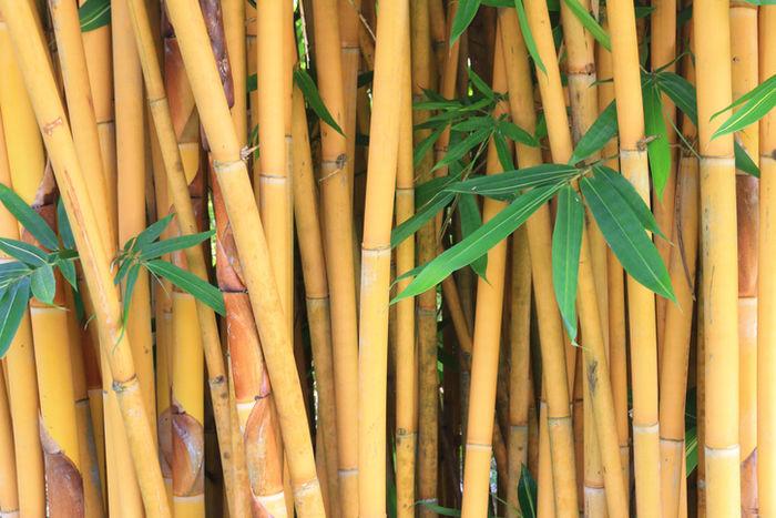 竹林のアップ