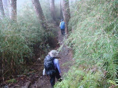 草が押し茂る山道を歩く女性