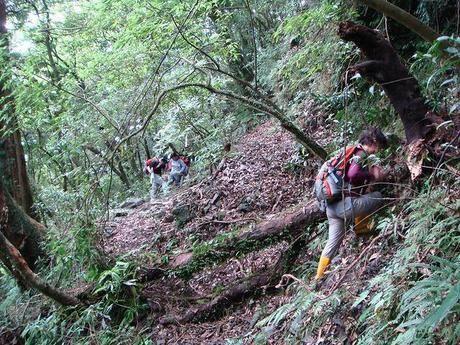 木々が倒れている険しい山道を登る女性