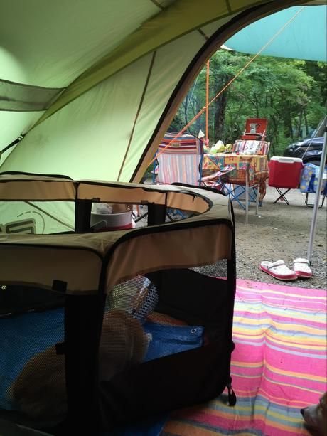 テント内に置かれたケージ