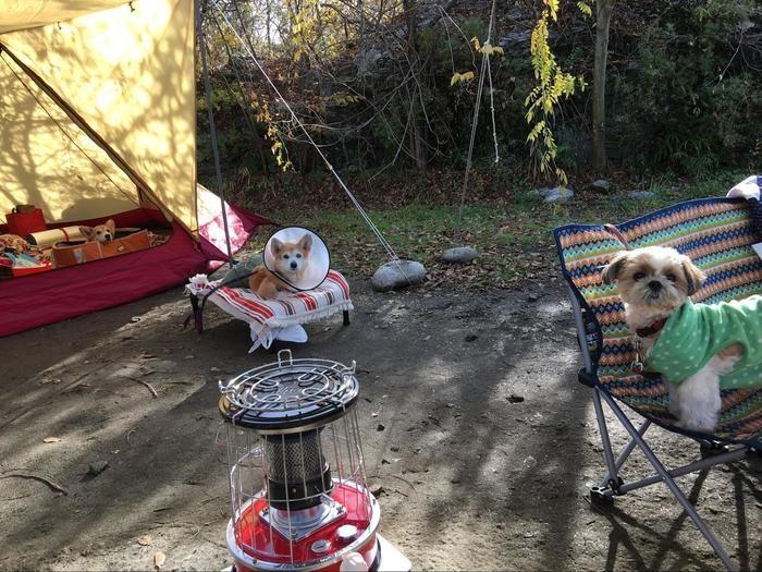 キャンプチェアに座る犬たち