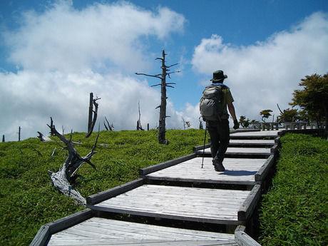 木製階段の山道を登る男性の後ろ姿