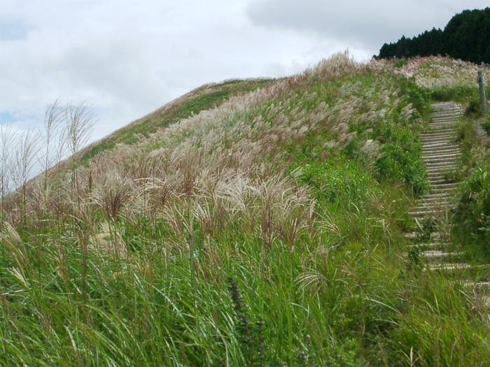 岩湧山のススキに囲まれる登山道