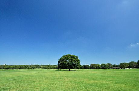 昭和記念公園園内の広大な芝生