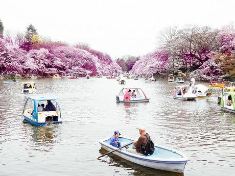 春の井の頭公園の池の様子