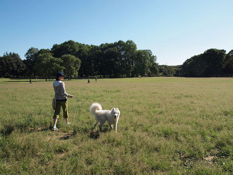 小金井公園の園内の芝生
