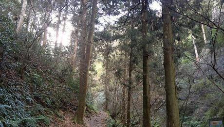 木が生い茂る山