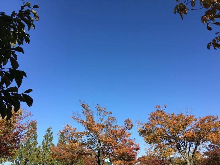 青空と紅葉した木々