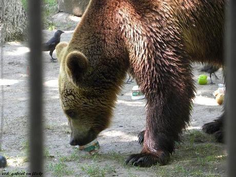 物を食べるクマ