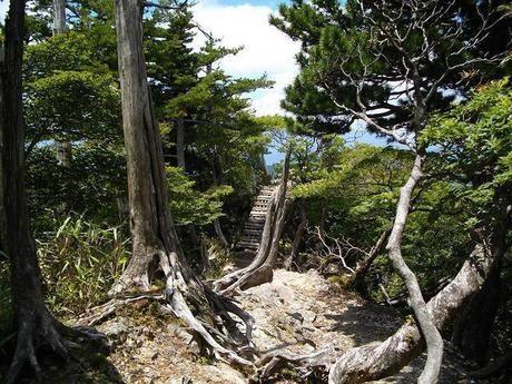 生い茂る木の根っこ