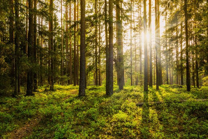 太陽の光が差す林