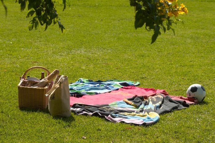 砧公園の芝生とピクニック用品