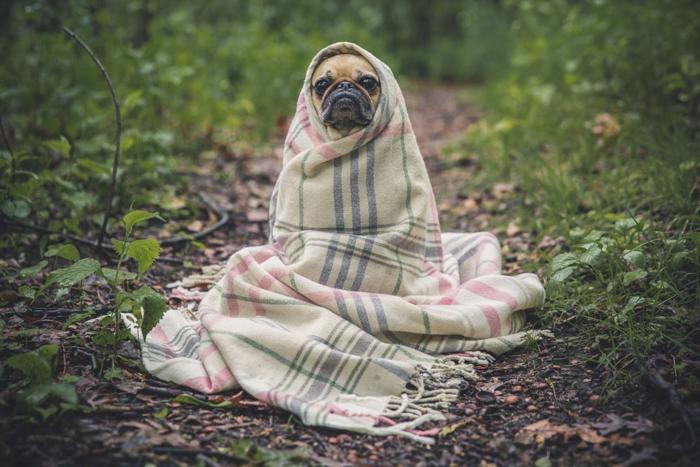 ネックウォーマーに包まる犬
