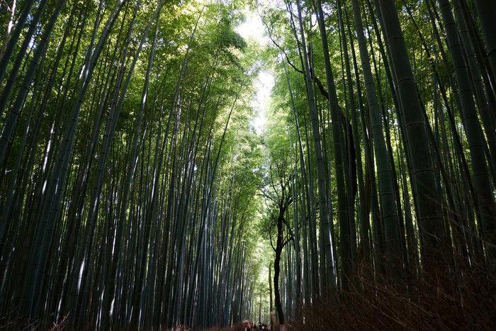 竹林の小径(こみち)
