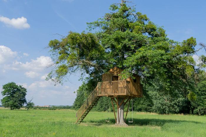 草原にたつツリーハウス