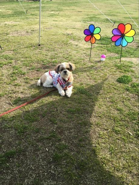 ウィンドスピナーで飾られたテントサイトと犬