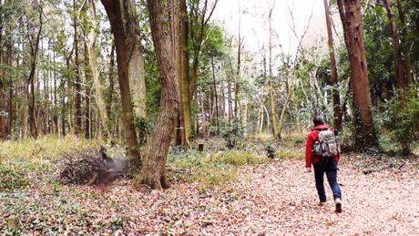 自然の中を歩く人