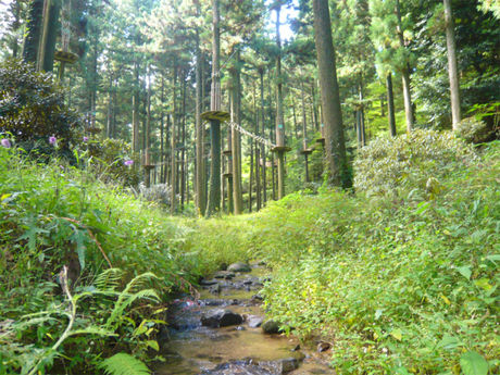 フォレストアドベンチャーの森林