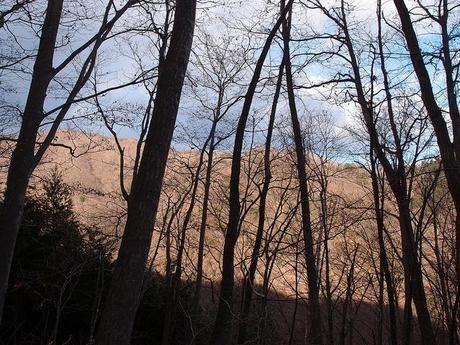 雲取山の木々