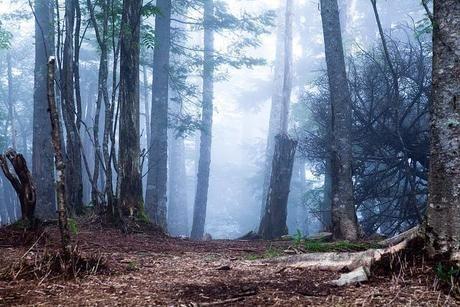 大菩薩嶺の林道