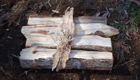 地面に薪を並べた様子