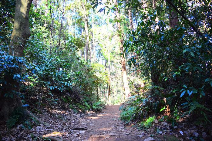 瑞泉寺方面の下山道