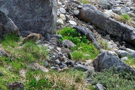乗鞍岳の自然と動物