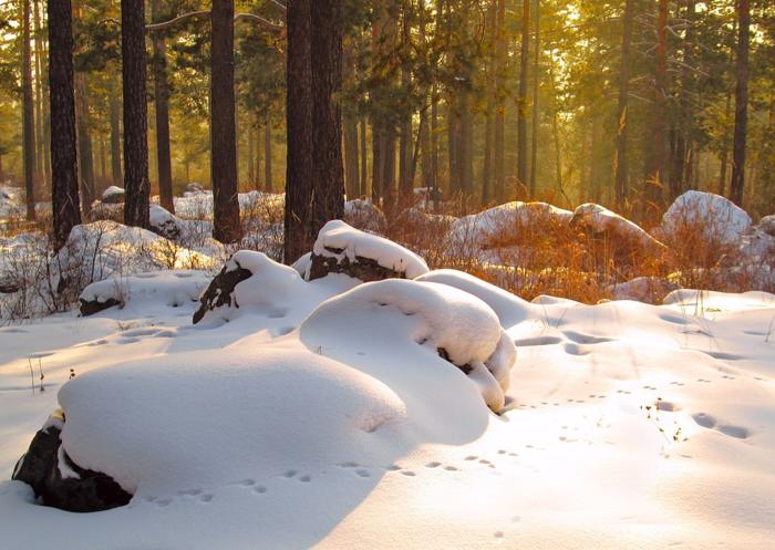 雪山の林間