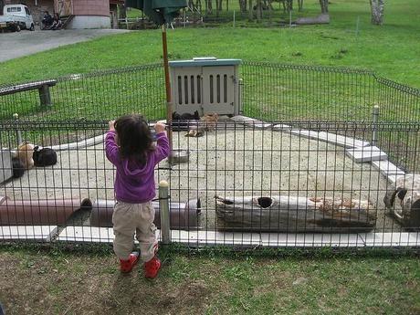 蓼科牧場のふれあい牧場をのぞく子供
