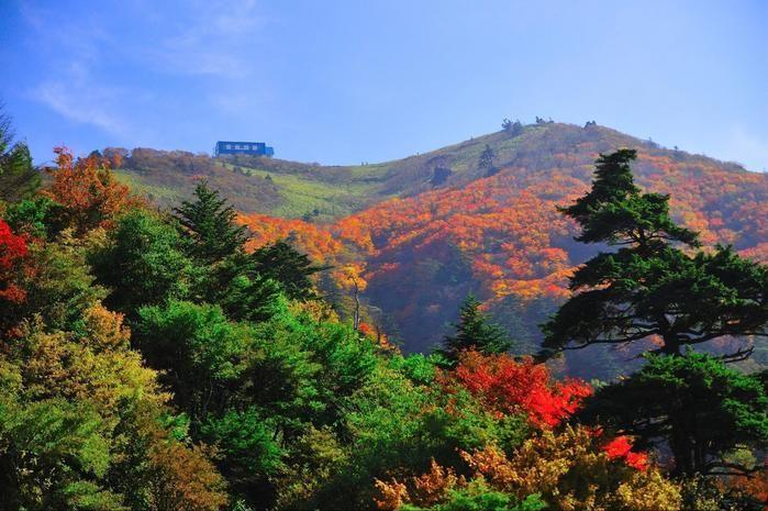 紅葉した剣山の木々