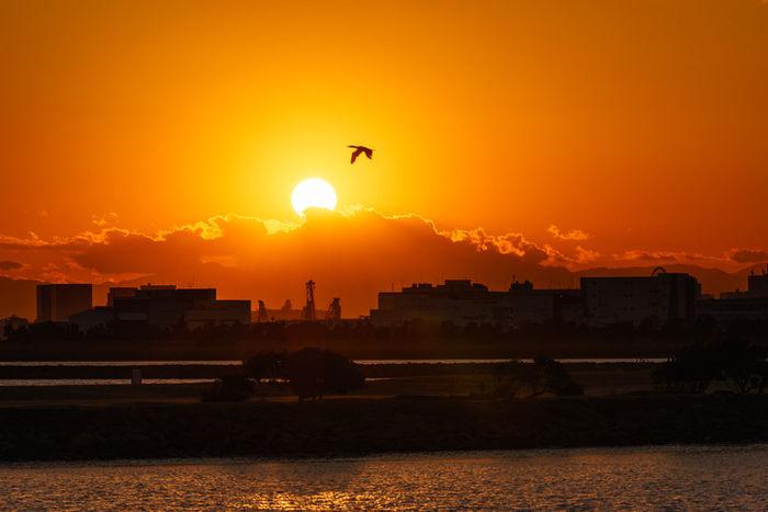 葛西臨海公園の夕日と街並み