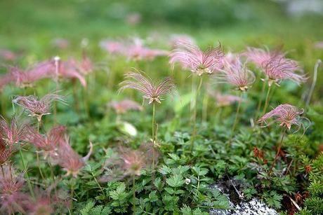 山の中に生えている植物