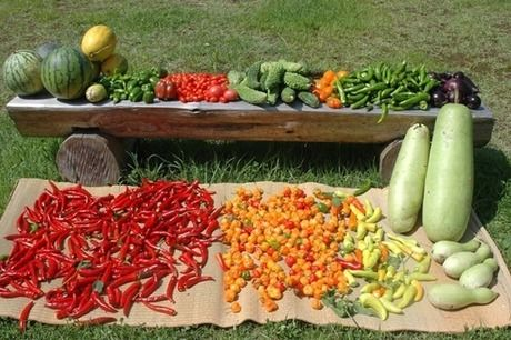 収穫された野菜や果物