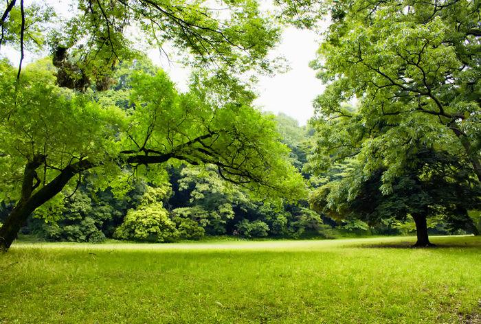 芝生が広がる公園