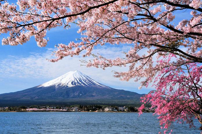 富士山と咲き誇る桜