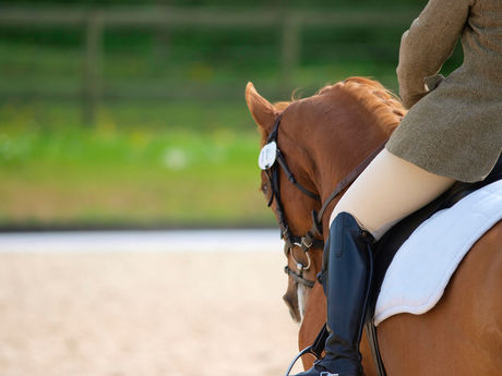 乗馬体験をする女性