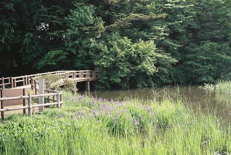石神井公園の池と橋