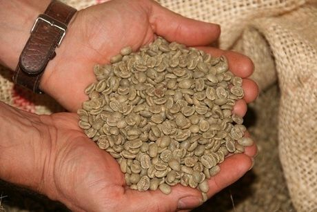 掌いっぱいのコーヒー豆