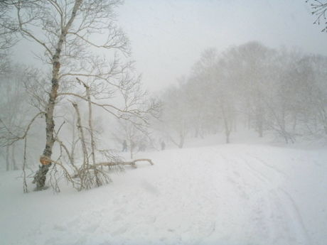 吹雪で視界が悪い様子