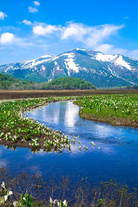 尾瀬に咲いたニッコウキスゲと燧ケ岳